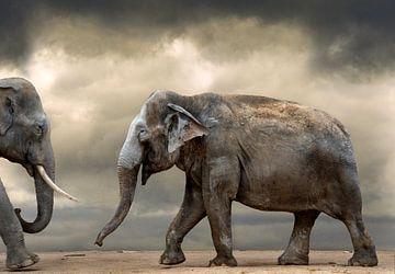 Tanzende Elefanten von Marcel van Balken