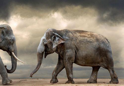 Dansende olifanten