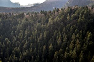 Forest.  von