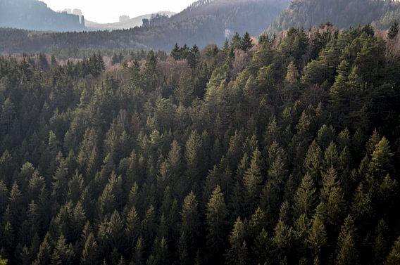 Forest.  von Tina Hartung