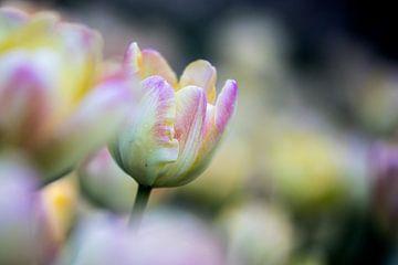 tulpen in pasteltint 1 van Leontien van der Willik-de Jonge
