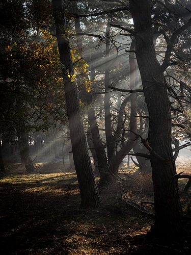 Lichtharp van Mattijs Diepraam