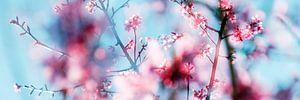 Lente!  (Springtime!)