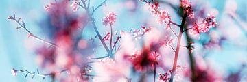 Frühling von