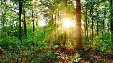 Zonneschijn in het bos van Günter Albers