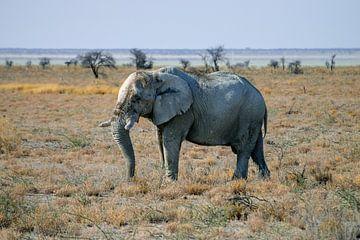 Der Elefant von Merijn Loch
