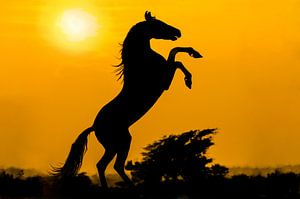 Marwari zonsondergang van
