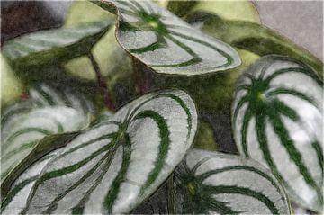 Planten 11 van Miriam Duda