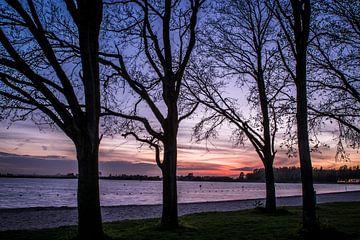 Bomen aan het meer von michael regeer