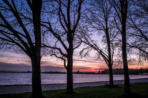 Bomen aan het meer van