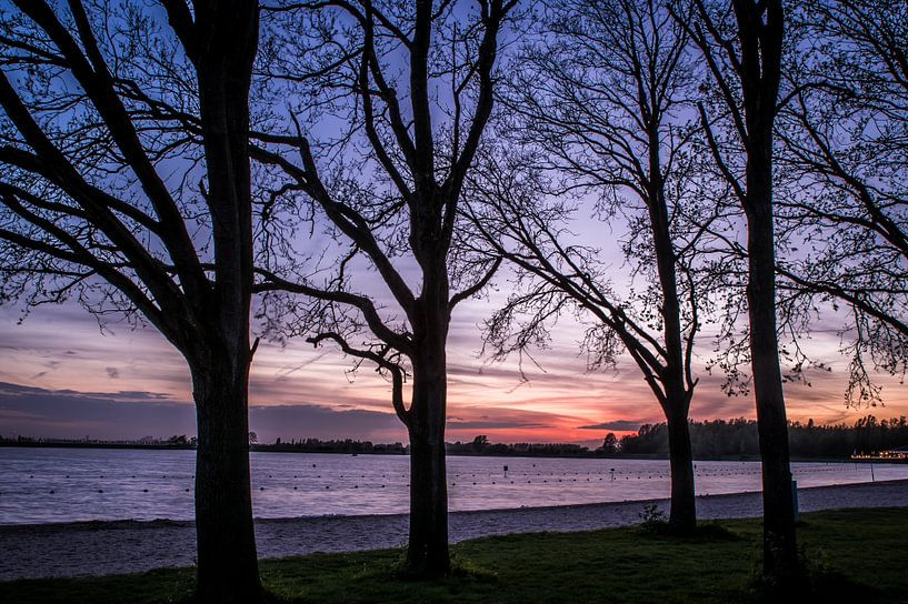 Bomen aan het meer van michael regeer
