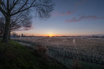 Beregenen fruitboomgaard van Moetwil en van Dijk - Fotografie