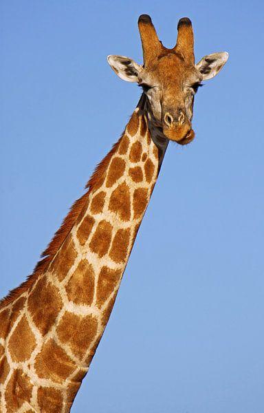 The Giraffe - Afrika wildlife von W. Woyke