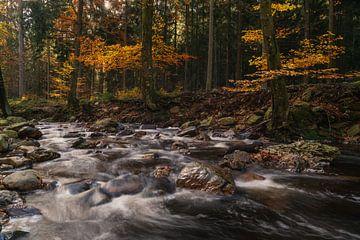 Herbstliche Beschleunigung von Joris Pannemans - Loris Photography