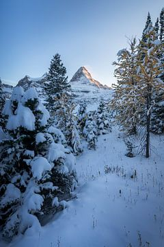 Kanada sneeuw landschap van Remco van Adrichem