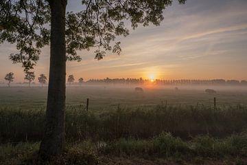 Koeien bij zonsopkomst van Moetwil en van Dijk - Fotografie