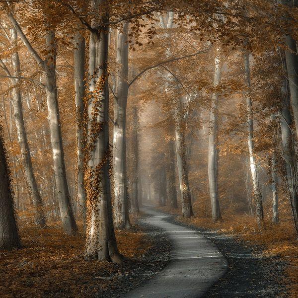 A Pleasant Walk van Lars van de Goor