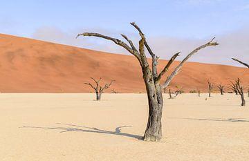 Bäume in der Wüste Namib von Achim Prill