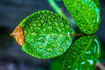 Regen op blad von Michiel van Druten