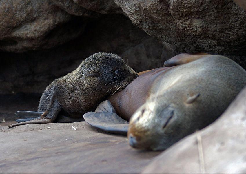 Pelsrob met jong - New Zealand fur seals van Jeroen van Deel