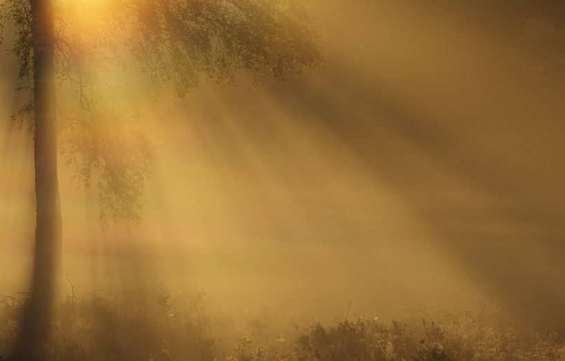Mystical lights sur Hans Koster
