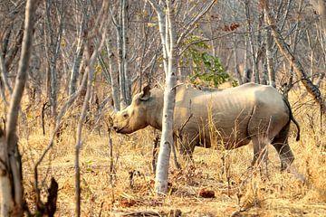Nashorn in Sambia von Merijn Loch