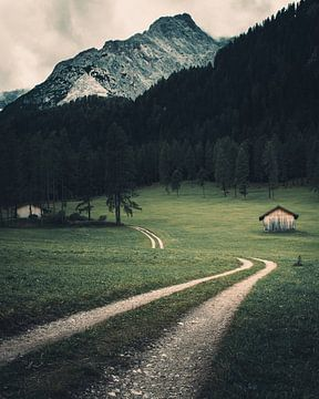 Bergwiese im Fischleintal - Südtirol von Steffen Peters