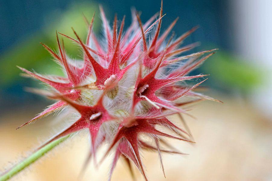 Structure florale