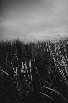 Stoere zwart wit detail foto van de duinen op Ameland van Holly Klein Oonk
