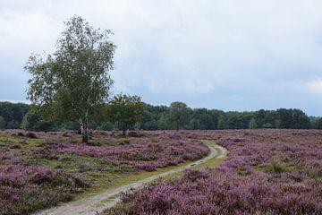 Een pad en bomen op de paarse hei van Gerard de Zwaan
