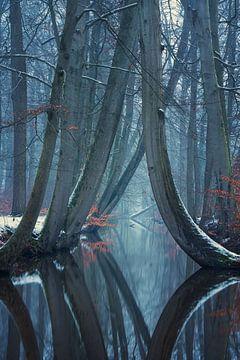 De kromme bomen van Twickel van Martin Podt