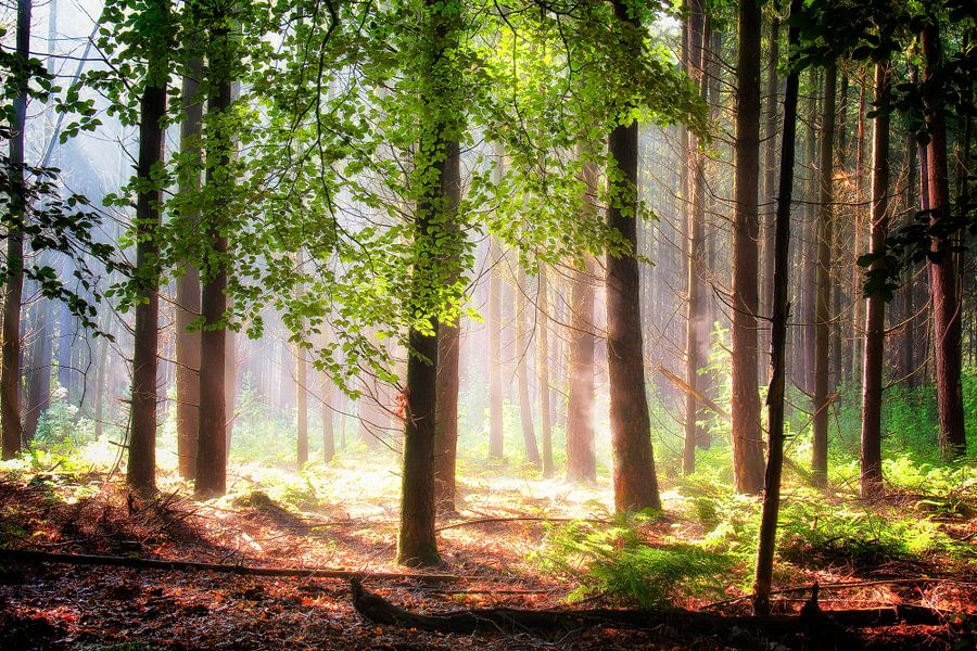 The forest is warming up van Rigo Meens