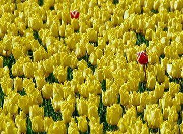 Bloemen/Tulpen van Marcel Pietersen