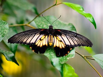 vlinder 4 sur Jurgen den Uijl