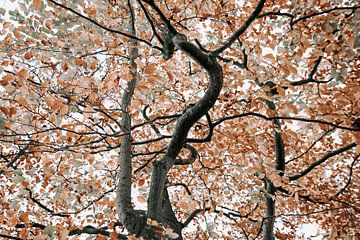 Herfstboom met sierlijke takken van Ruth Kamstra