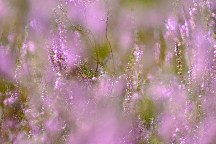 The color purple van Arjen Roos