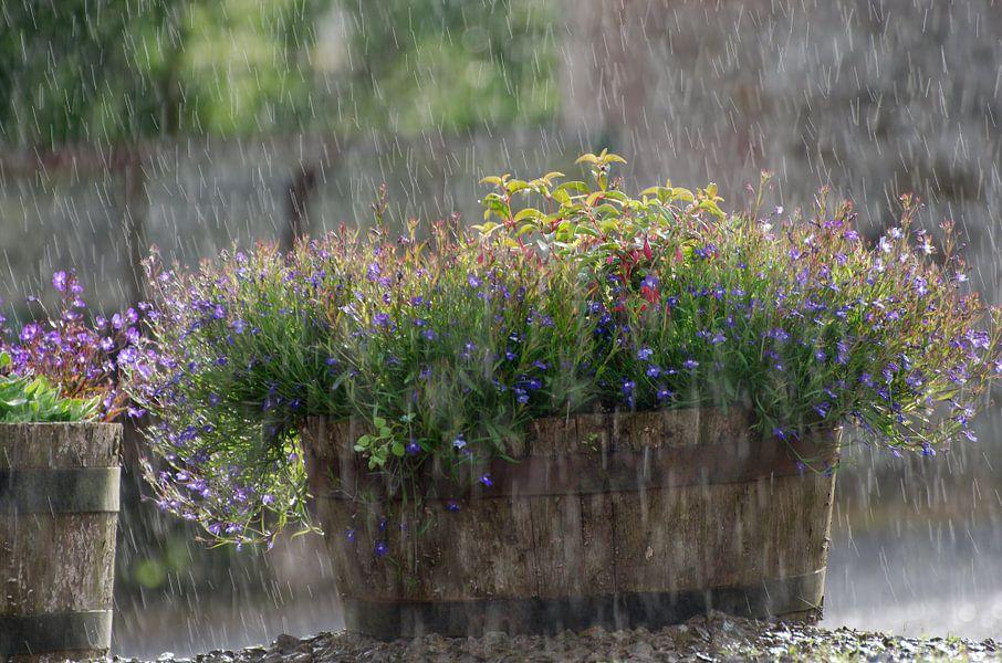 Regen En Zonneschijn : In regen en zonneschijn van jaap kloppenburg op canvas behang en meer
