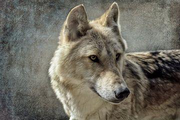 Loup sur Claudia Moeckel