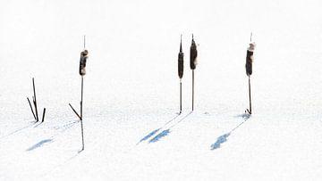Rohrkolben im Eis von Anouschka Hendriks