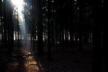 De zon door de bomen van Hans Peter Debets
