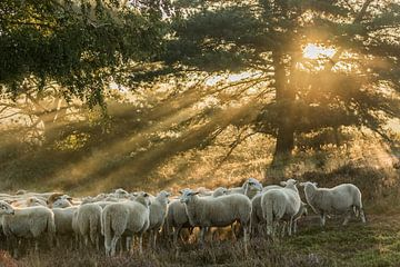 Im frühen Morgenlicht von Irma Huisman