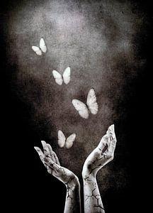 Vlinders collectie voorbeeld