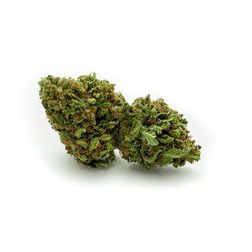CBD Cannabis Blüte von Felix Brönnimann