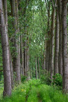Versteckte Allee von Bäumen von John Linders