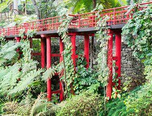 jpanese garden on madeira island