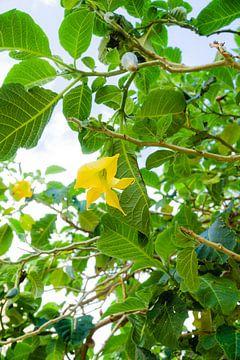 Gelbe Blume von Deborah Zannini