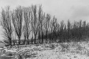 Bomenrij van Stefaan Tanghe