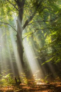 forest enlightenment van