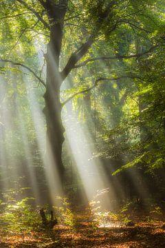 Walderleuchtung von