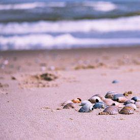 Schelpen op het strand van Anita Loos